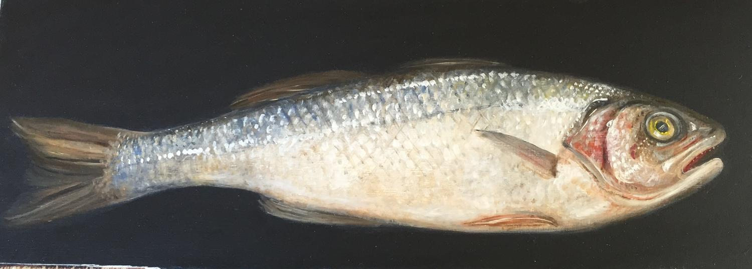 Painting of a sea bass