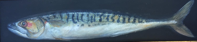 Painting of mackerel