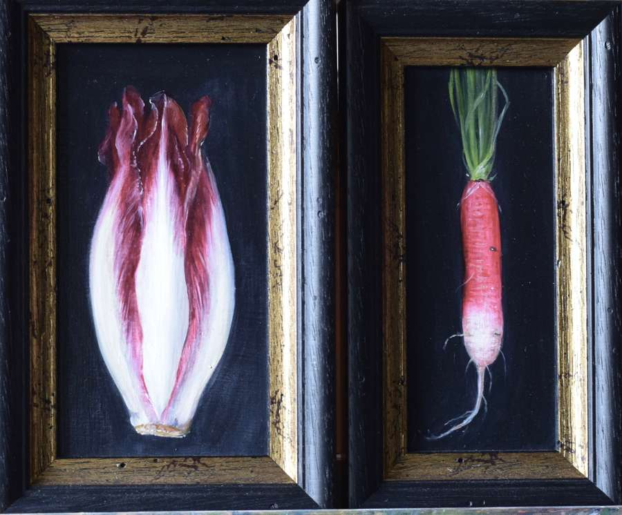 Red chicory and radish