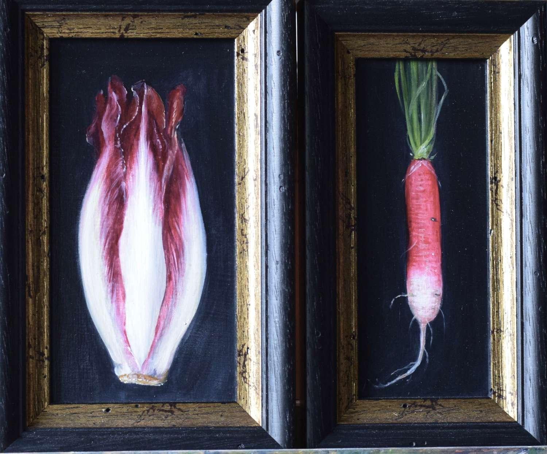 Red chicory and radish