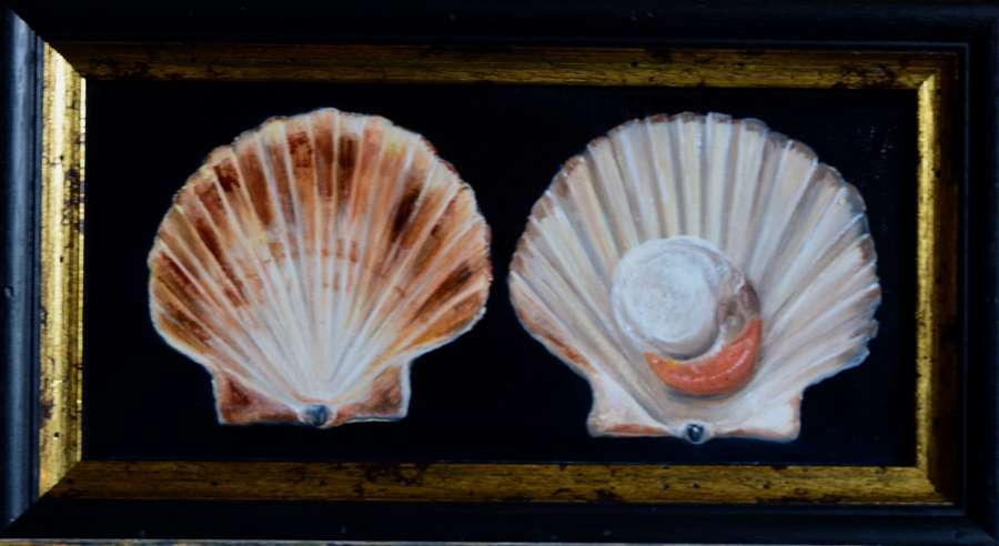 Scallop and shell