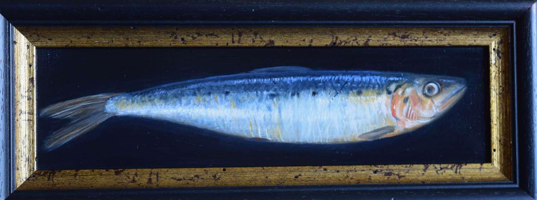 Large sardine