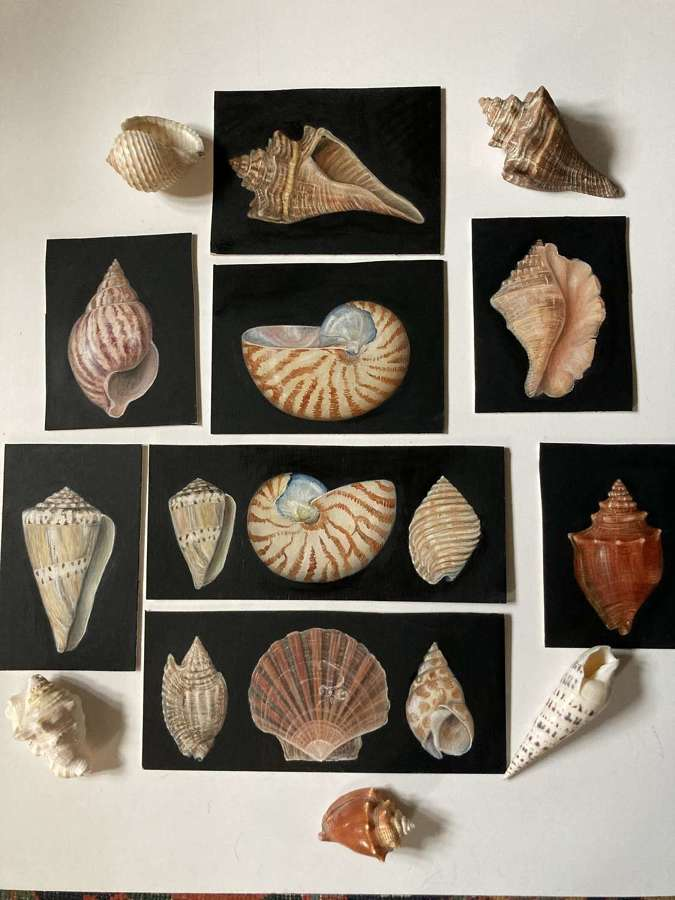 Collection of various shells